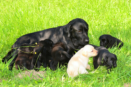 Cadela com filhotes