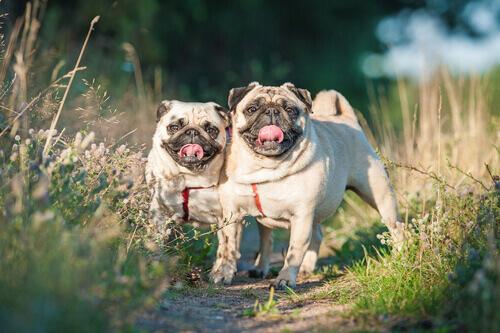 Tratar os gases nos cães
