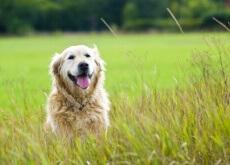 Carta para o meu cão adotado
