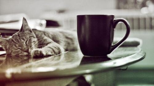 Gato e caneca de café