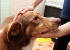 Como lidar com convulsões caninas
