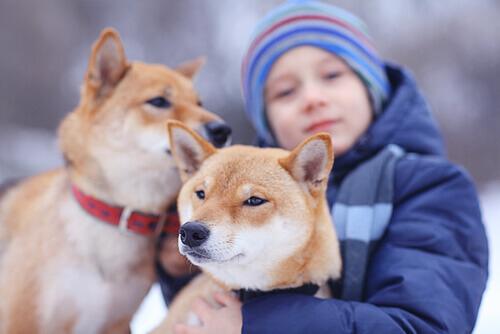 Menino com cachorros
