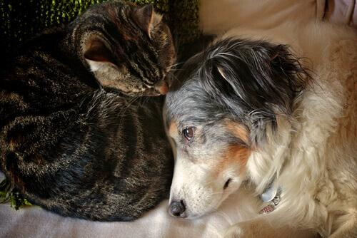 3 passos para curar uma queimadura em cão ou gato