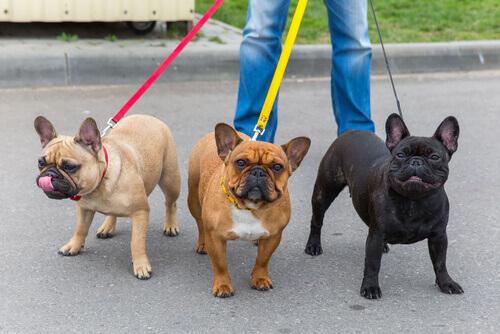 7 dicas para seu cão não puxar a coleira