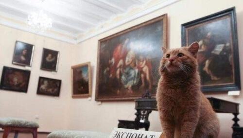 Um gato virou o concierge de um museu