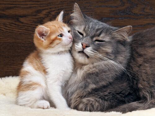Gata e seu filhote