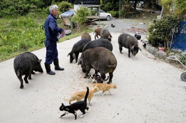 Fukushima e seu guardião de animais