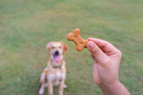 Petisco para cachorro
