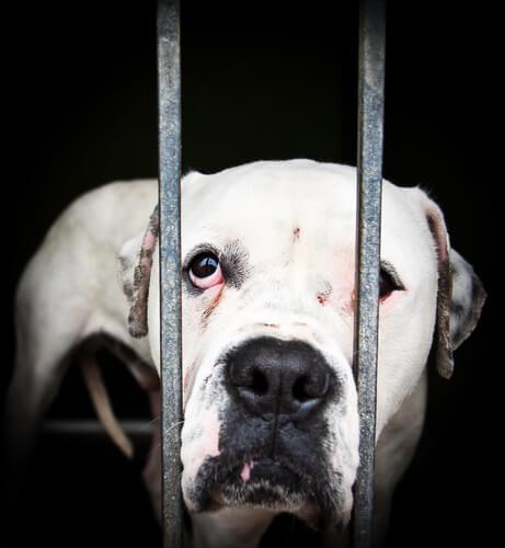 Cachorro atrás de grades