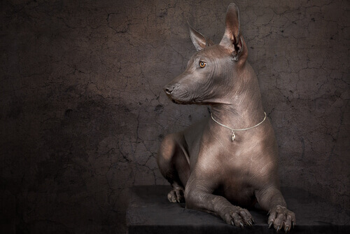 Quatro obras de arte com cães