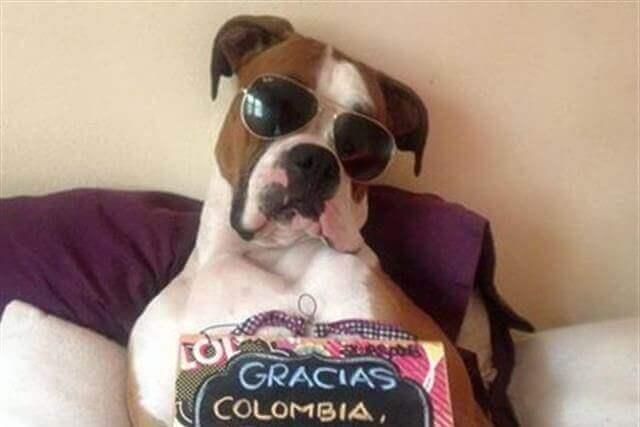 Oscar, o cão
