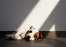 parasitas intestinais nos cães
