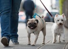 passeios_com_seu_cachorro