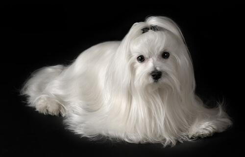 pentear-cachorro