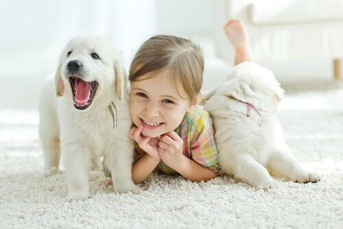 Os pets favorecem para que um bebê cresça mais saudável