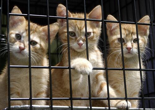 Gatinhos em gaiola