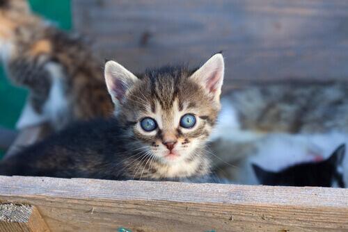 9 razões para adotar um gato