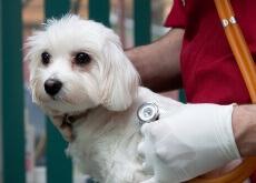 Existem seguros de saúde para cães