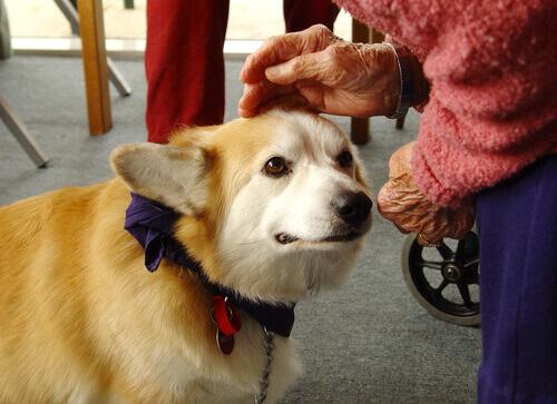 Cães que curam: a terapia canina