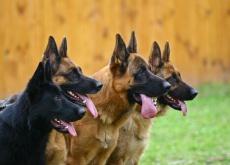 Quantos cães há no mundo