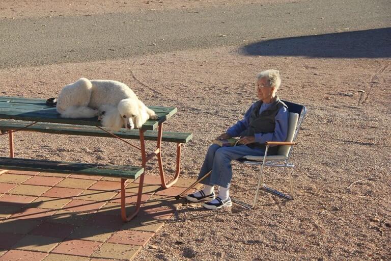 viúva de 90 anos que viaja com seu cão