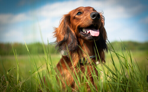 5 razões para adotar um cão e fazê-lo feliz
