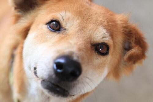 Como branquear as manchas lacrimais de seu cão