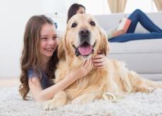 cães conseguem voltar para casa