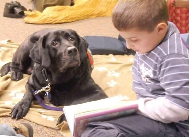 Os cães facilitam a aprendizagem infantil