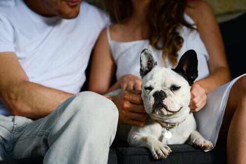 Casal com cachorro