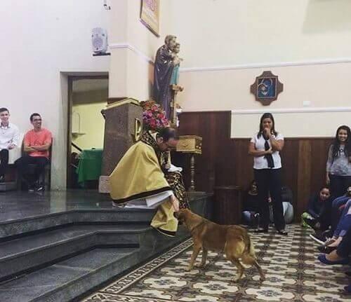 Cão de rua entra em uma igreja e recebe a bênção do padre