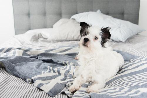 cão dormir em sua cama