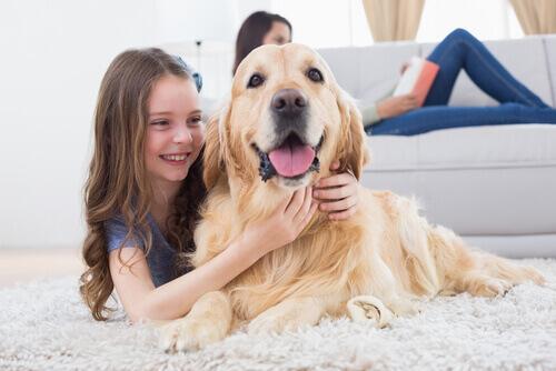 Como os cães conseguem voltar para casa?