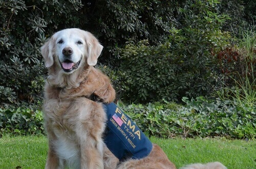 Nos despedimos do último cão de resgate de 11 de setembro