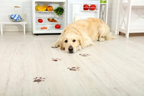 O azeite de oliva para cães pode ajudar na dieta do pet