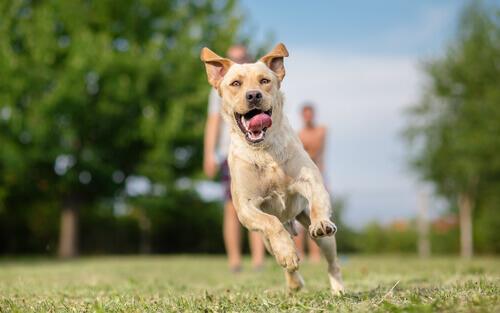 Cães, uma terapia para presidiários