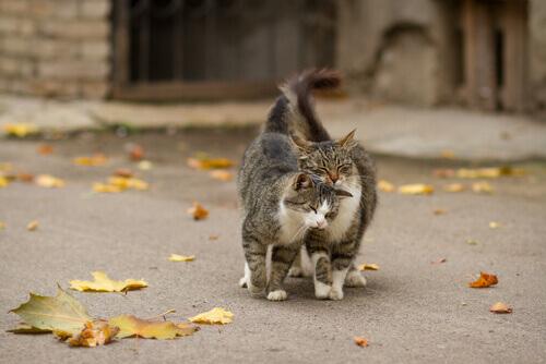 gatos marcam território