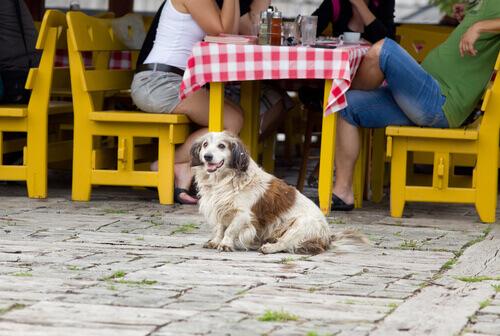 Não sem ele! Como fazer planos que incluam nosso cão?
