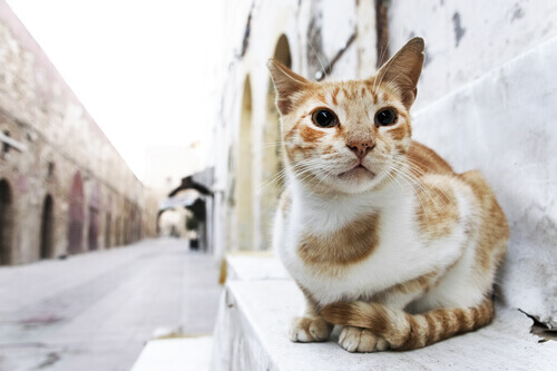 Sabia que os gatos se perdem mais que os cães?