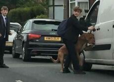 salvou um cão