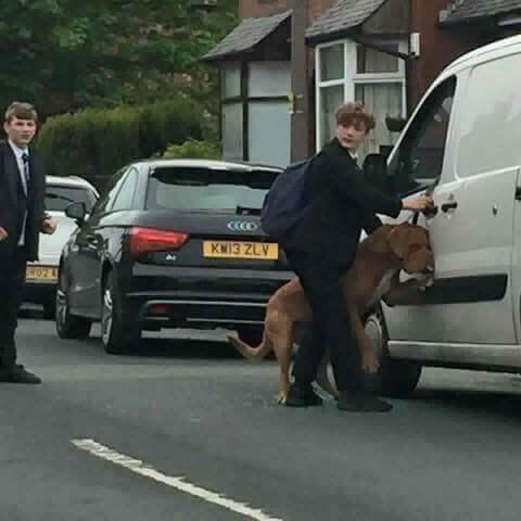 Bradley, o jovem que salvou um cão de morrer enforcado por sua própria correia