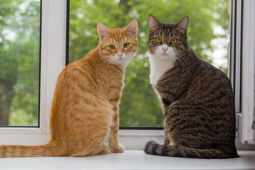 Novo gato em casa: como evitar problema com outros felinos