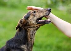 Nunca bata em seu cão