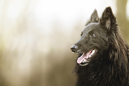 Black Dog Day