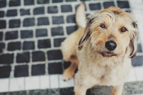 Como prevenir a gripe no cão
