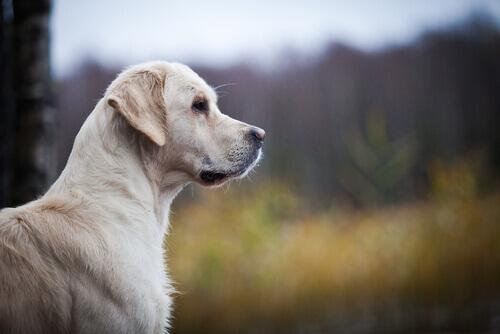 Como reconhecer em casa problemas cardíacos do cão