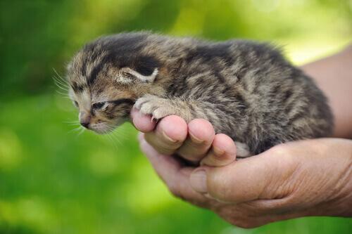 doenças comuns nos gatos