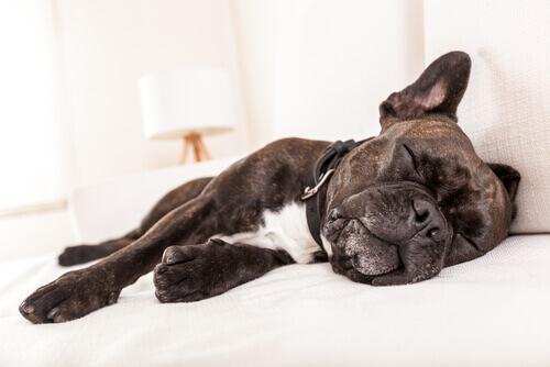 9 causas de vômitos em cães