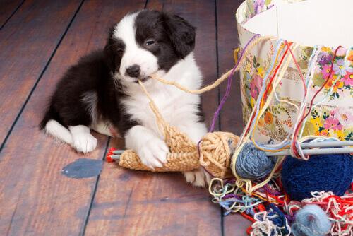 7 acidentes domésticos que podem ser perigosos para um cachorro