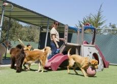 albergue-para-ajudar-os-animais